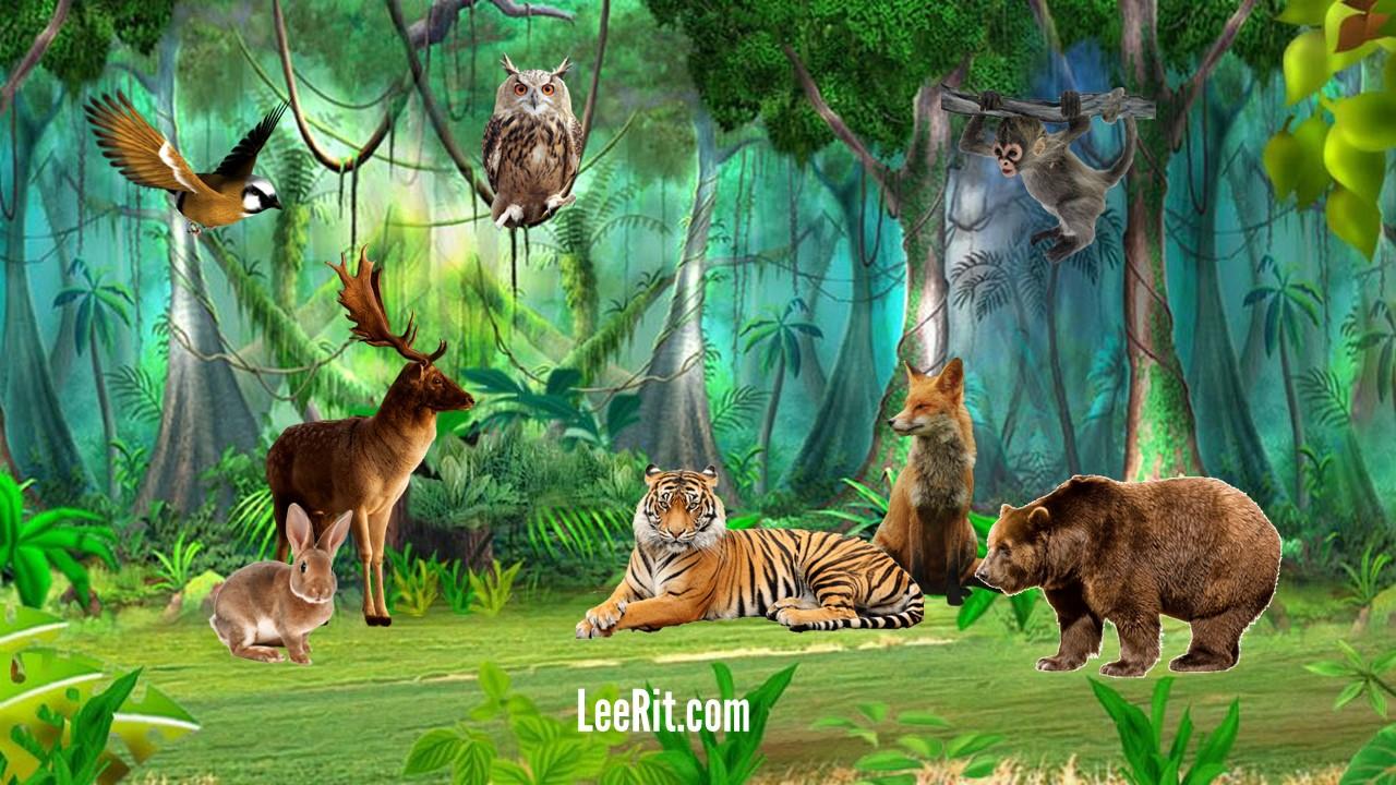 Từ vựng tiếng Anh về Động vật - Animals - Phần 1