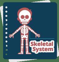 Từ vựng hệ xương